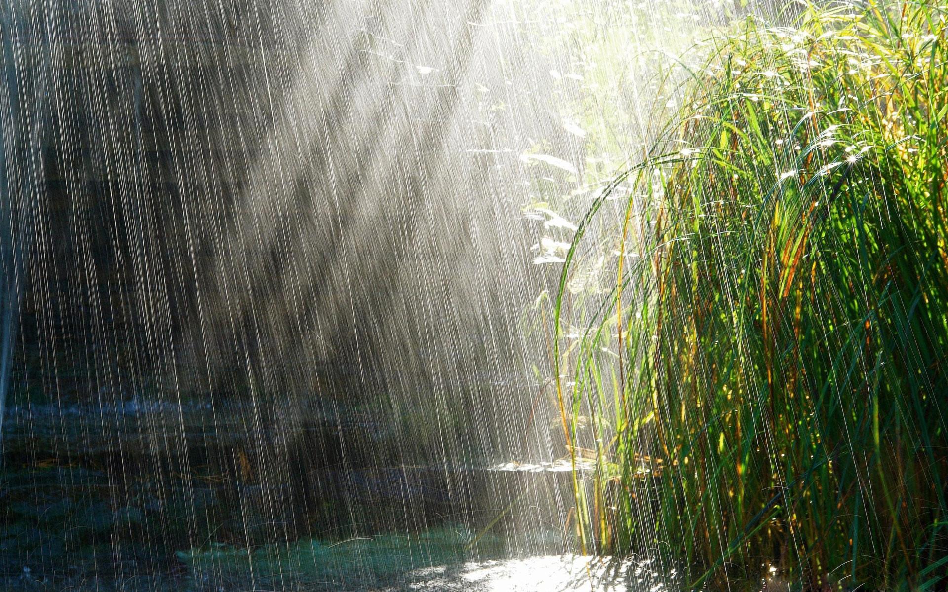 الاســـم:sunlight through rain.jpg المشاهدات: 313 الحجـــم:772.2 كيلوبايت
